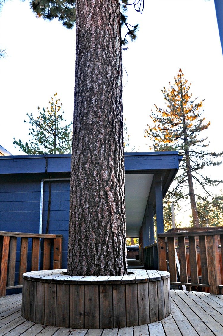 Tree bench at Basecamp Hotel in Tahoe South