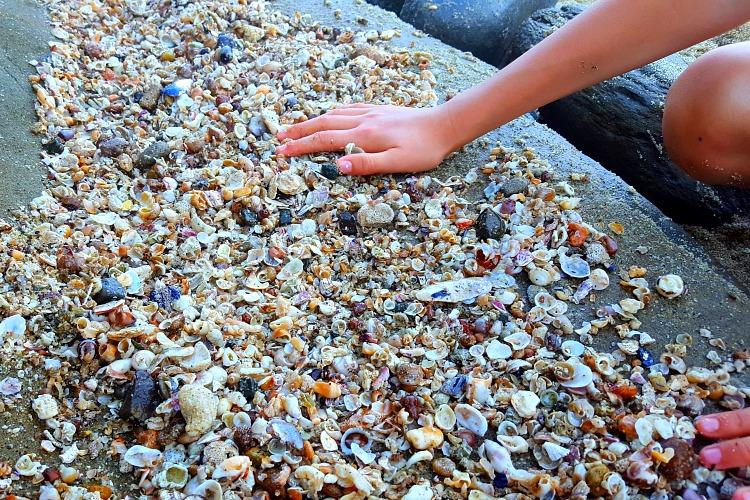 Shells line the beach in La Jolla, CA