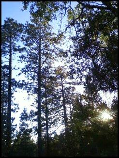 Backyard view in Big Bear