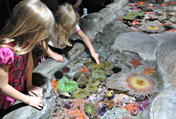 Zoë and Kaylee touching sea animals a Aquarium of the Pacific