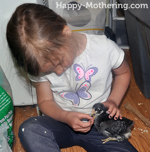 Zoë feeding a chick a mealworm
