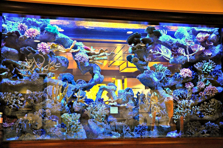Giant aquarium wall at the Four Seasons Westlake Village
