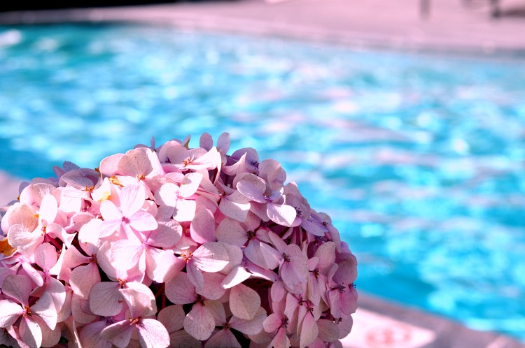 Hydrangeas by the pool at Hofsas House in Carmel by the Sea, CA