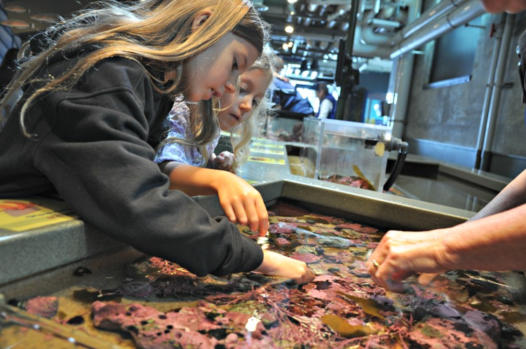 Zoë and Kaylee playing with sea creatures at the Monterey Bay Aquarium