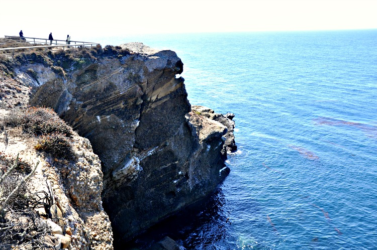Cliff at Point Lobos State Reserve