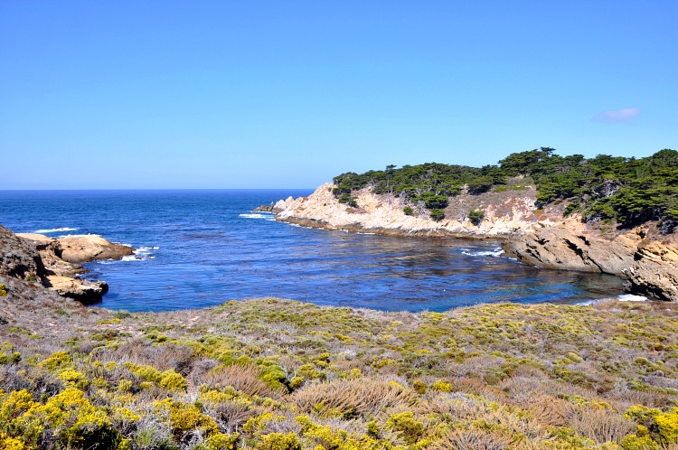 Beautiful views at Point Lobos State Reserve