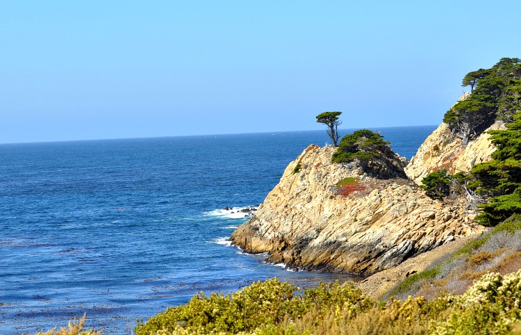 Net tree overlooking Point Lobos State Reserve