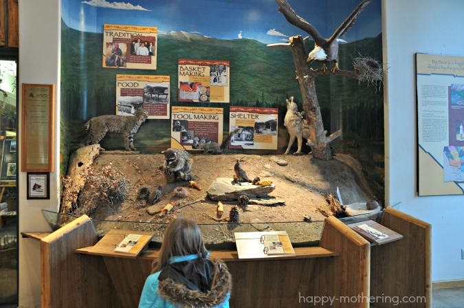 discovery-center-animals