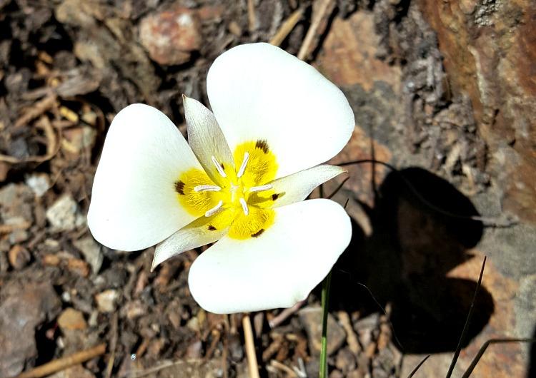 Wildflowers in Tahoe South